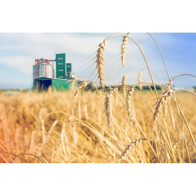 Перечень оборудования для определения качества зерновых, бобовых, масличных культур, согласно требований существующих нормативов (ДСТУ, ГОСТ ов) (ПРОДОЛЖЕНИЕ2)